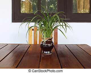 Variegated mondo grass is ornamental plants on desk or...