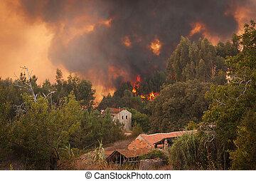floresta, selvagem, fogo, casas, PORTUGAL, verão