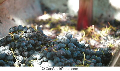 Home Winemaking - Homemade wine production - tread out the...