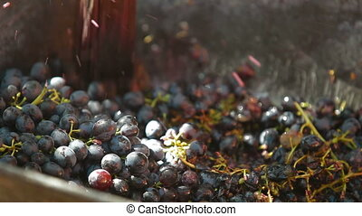 Homemade Wine Production