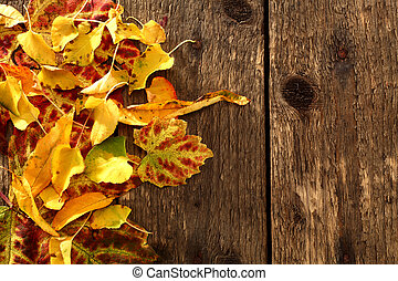 colourfull leaves - autumn colourfull leaves on wooden...