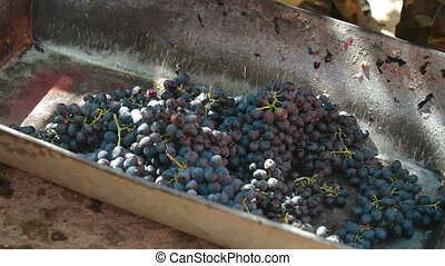 Homemade Winemaking