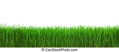 Grass isolated on white background with clipping path