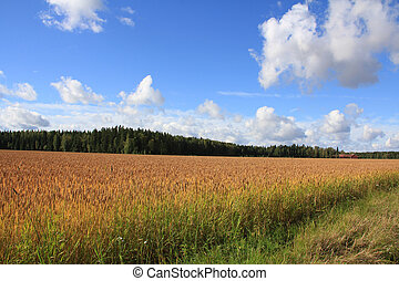 Autumnal Landscape with Wheat Field