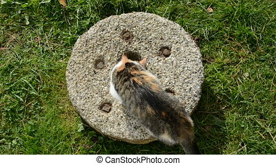 young cat on old millstone in farm