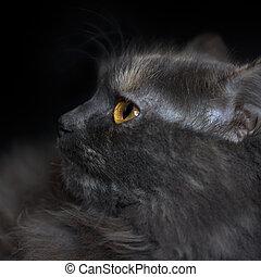 Portrait of a cat in profile
