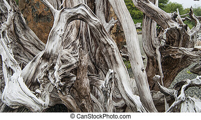 Driftwood twisted wood worn from beach