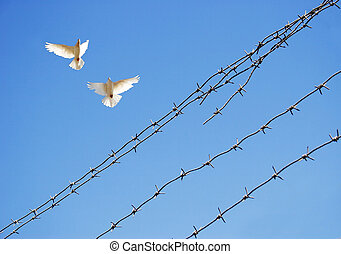 Two doves in sky around barbed wire