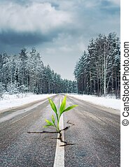 Green plant growing through the road in winter forest