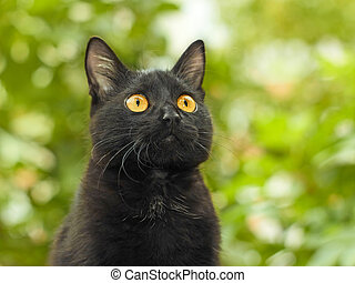 Black cat on green foliage background - Portrait of funny...