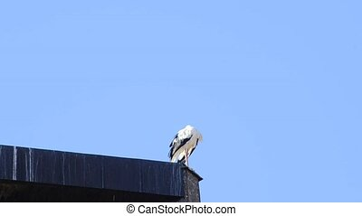 stork on a church tower ready for migratory flight