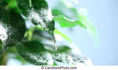 Macro waterdrop on green leaves