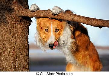 cute funny dog stucks her tongue - cute happy dog makes a...