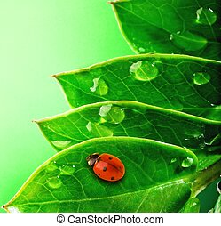 mariquita, fresco, verde, hojas