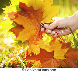 Autumn leaves in human hand