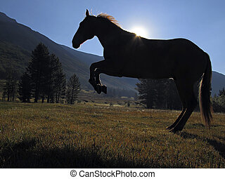 Silhouette of Hobbled Horse - Silhouette of hobbled horse...