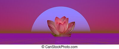 Lily flower and moonlight - Pink lily flower on water in...