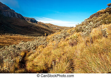 Landscape at Nevado del Ruiz - The landscape of the Nevado...