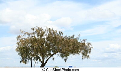 Tree Timelapse - Timelapse of a tree moving in the wind with...