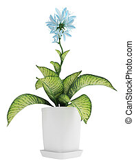 Pretty blue flowering Hosta with variegated green and yellow...