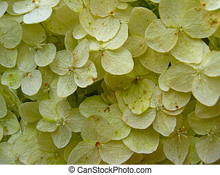 Yellow unusual background of plant - The image of the...