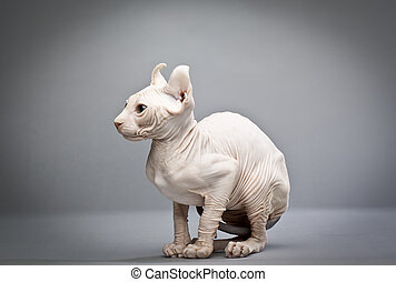 wrinkly cat
