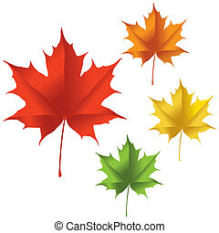 Maple leaf - A maple leaf in red, yellow, orange, and green...