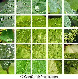 Green leaf with rain droplets 2 - Collage from photos of...