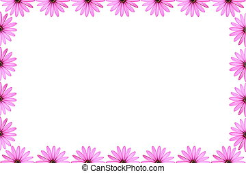 Pink Daisy Frame - Pink daisies isolated on white as a...