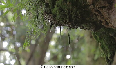 Rain drops. Forest, moss. Dzen calmness background.