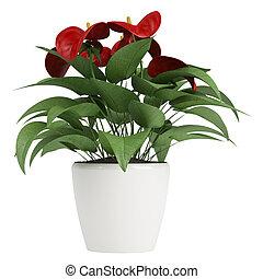 flores, rojo,  Anthurium