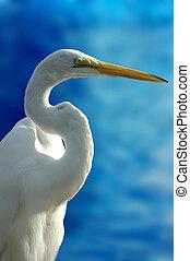 Bird on Blue - Close-up shot of a bird (crane)