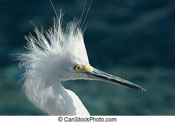 Wierd Bird - Close-up shot of a bird (crane)