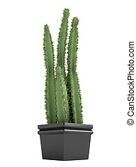 Pilosocereus cactus or hairy cactus - Pilosocereus cactus or...