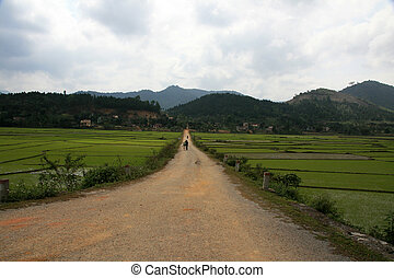 Rice Field, Vietnam - Rice Paddy in Phong Nha Ke Bang Region...