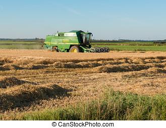 máquina, campo, grano, trilla