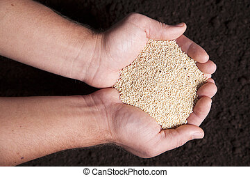 Organic Quinoa - A pair of cupped hands are holding dried...