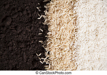 Rice and Dirt