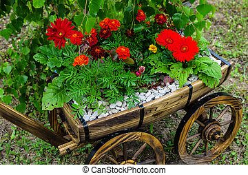 old garden cart with flowers - cultivation of flowers in the...
