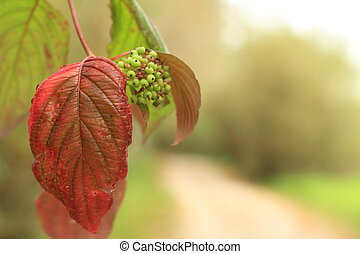 Autumn Leaf - A close up image of an Autumn leaf with a...