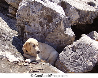 Dog stone hideout - Dog hideing from the sun