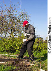 An old man working in a vegetable garden