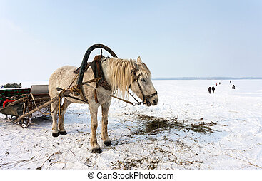 Horse at the bank of frozen river Volga in Samara, Russia