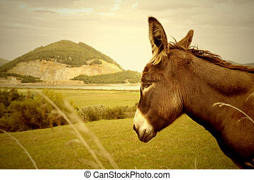 donkey and Montehano quarry, Marshes nature reserve Santo?a...