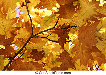 foliage at fall