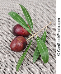 Olive branch on linen texture