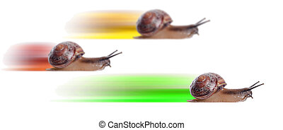 Concept. fast snail with colored silhouette. Focus on front...