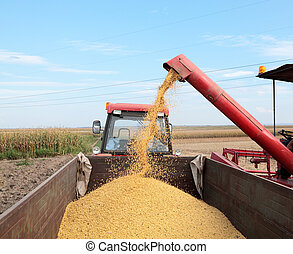Soybean harvesting - Grain auger of combine pouring soy bean...