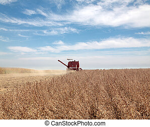 Soybean harvesting - Harvesting of soy bean field with...