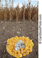 Harvested corn in a basket with dollar banknotes and field...